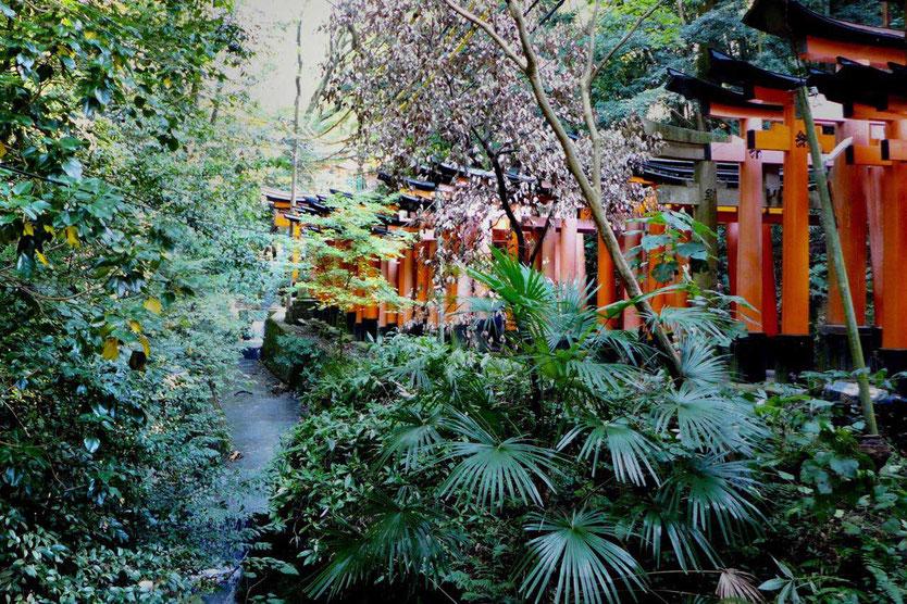 Besuch Fushimi-Inari-Taisha berühmtester Schrein Tempel Kyoto 1000 Tausend Tore  Reisebericht