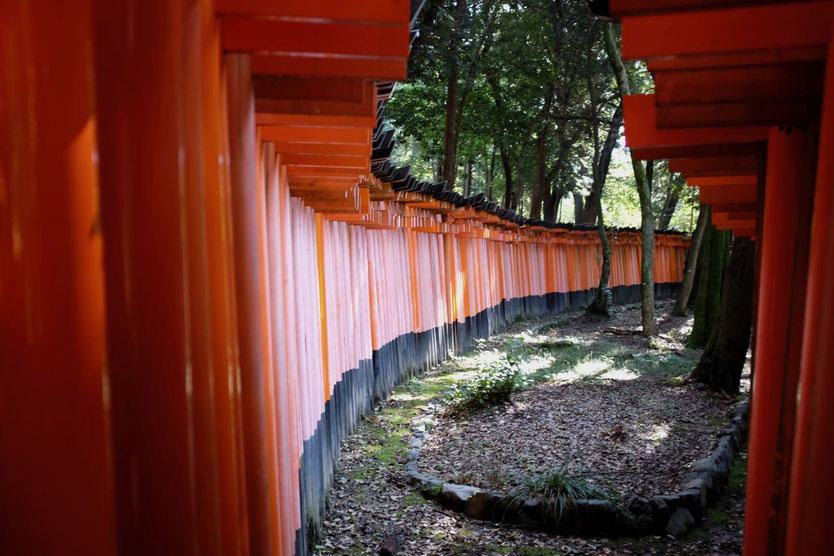 Fushimi-Inari-Taisha Öffnungszeiten, Opening Fuchs Schrein Tempel Kyoto 1000 Tausend Tore Torii by night Reisebericht