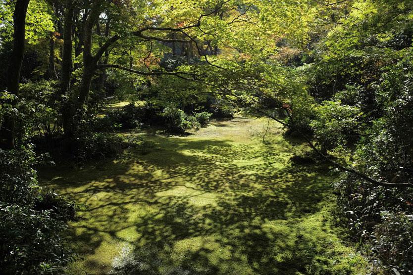 Kyoto Ausflug Tipp Arashiyama guide to Okochi Sanso Villa by movie star Denjiro Okochi Garten visit gardens tearoom
