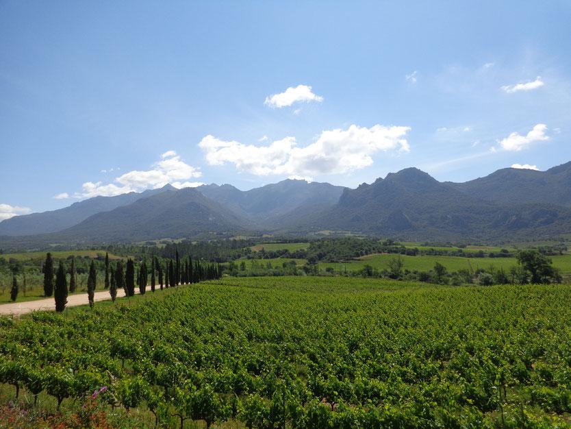 La Caviste Vins Corses Sartène