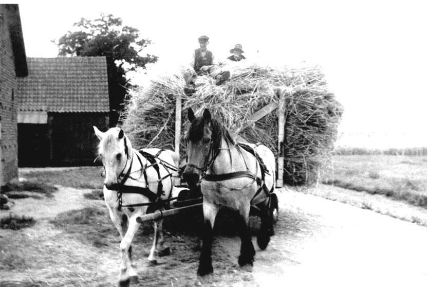 Getreide-Fuhre in der Sudweyher Heide (Achtern Busch) in den 1950er Jahren  Foto: B.Stolte
