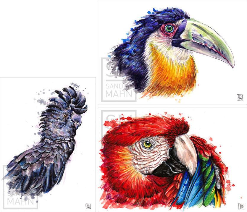 Kakadu (verkauft) - Tukan (verkauft) - Papagei (verkauft) | cockatoo (sold) - toucan (sold) - macaw (sold)