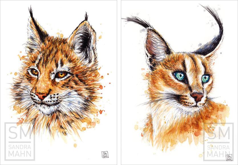 Luchs (verkauft) - Karakal (verkauft) | lynx (sold) - caracal (sold)