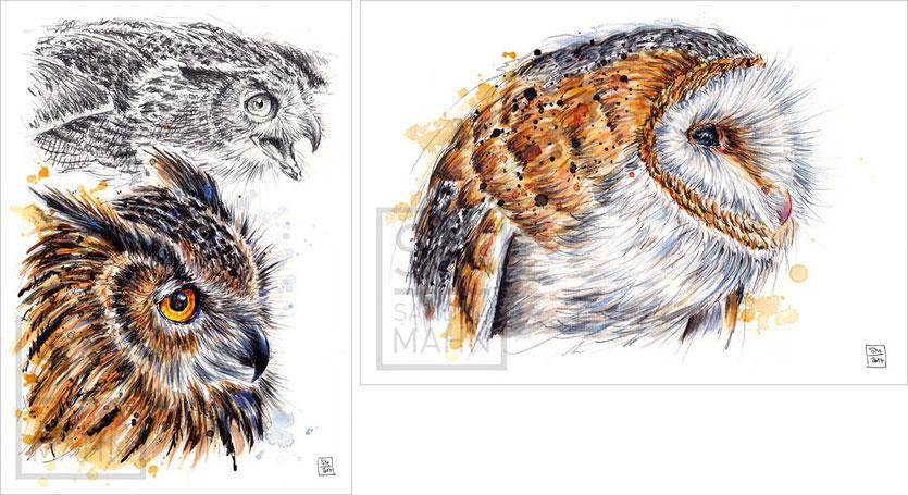 Uhu - Schleiereule | eagle-owl - barn owl
