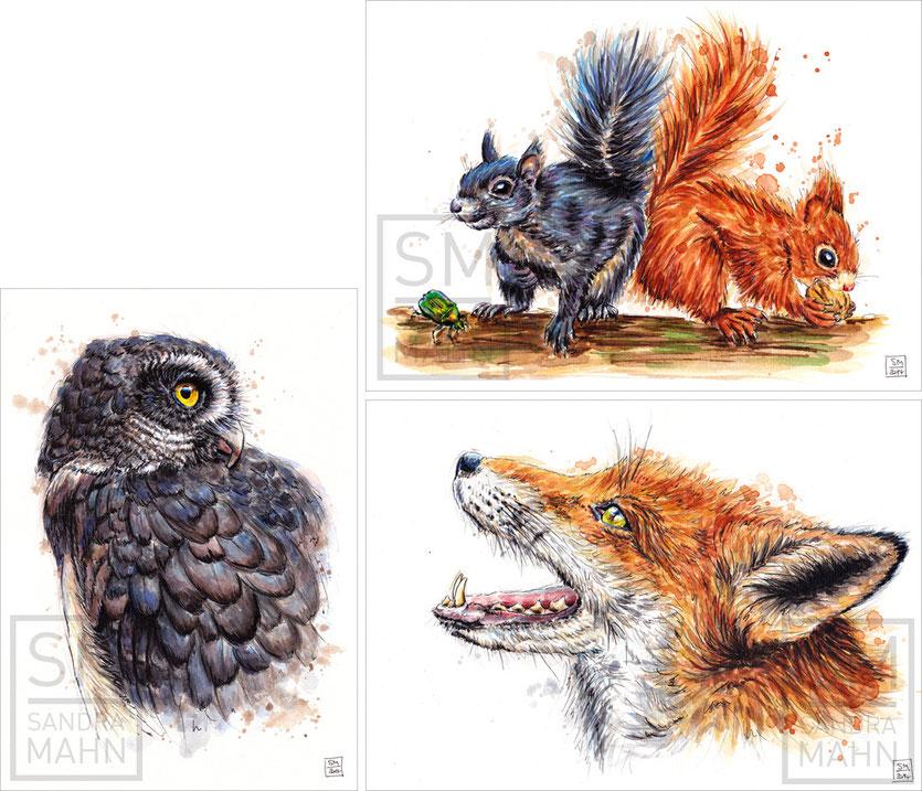 Brillenkauz (verkauft) - Eichhörnchen (verkauft) - Fuchs (verkauft) | spectacled owl (sold) - squirrels (sold) - red fox (sold)