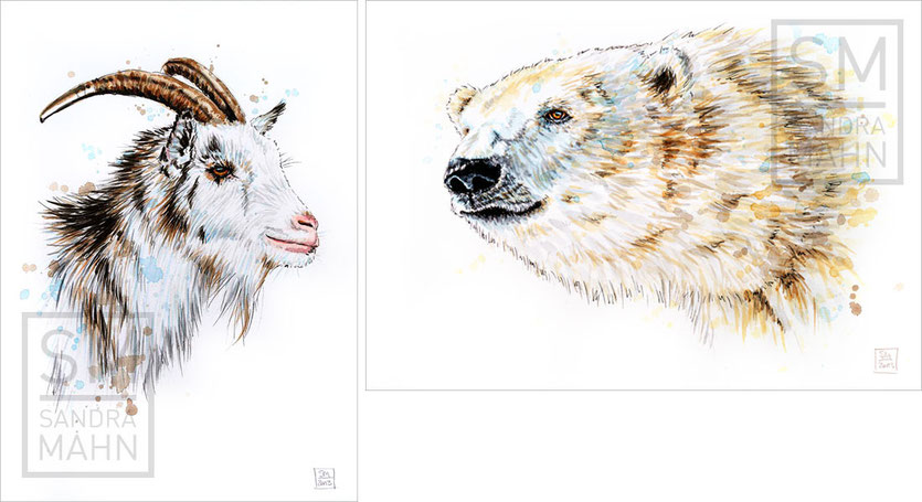 Ziegenbock (verkauft) - Eisbär (verkauft) | goat buck (sold) - polar bear (sold)