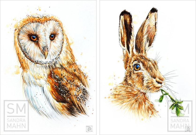 Schleiereule (verkauft) - Feldhase (verkauft) | barn owl (sold) - european hare (sold)