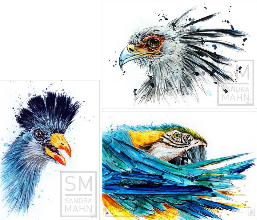 Turako - Sekretär (verkauft) - Papagei (verkauft) | turaco - secretary bird (sold) - macaw (sold)