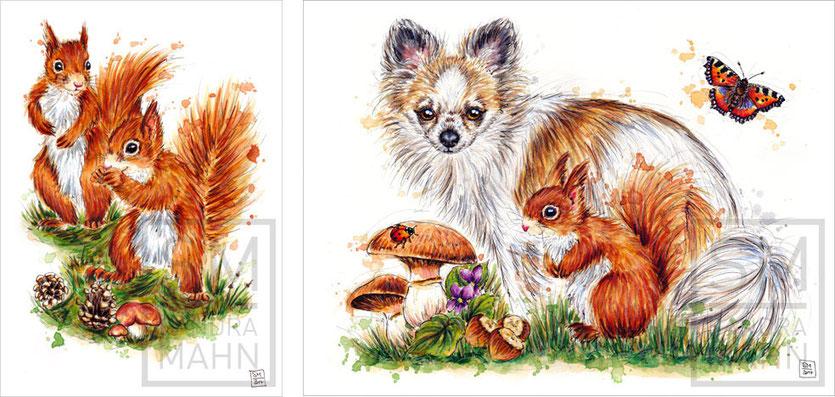 Eichhörnchen - Chihuahua | red squirrel - chihuahua
