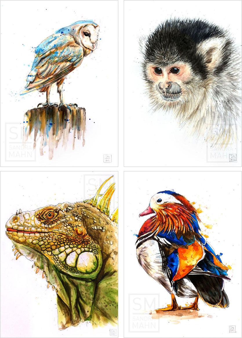 Schleiereule (verkauft) - Leguan (verkauft) - Totenkopfäffchen (verkauft) - Mandarinente | barn owl (sold) - squirrel monkey (sold) - iguana (sold) - mandarin duck
