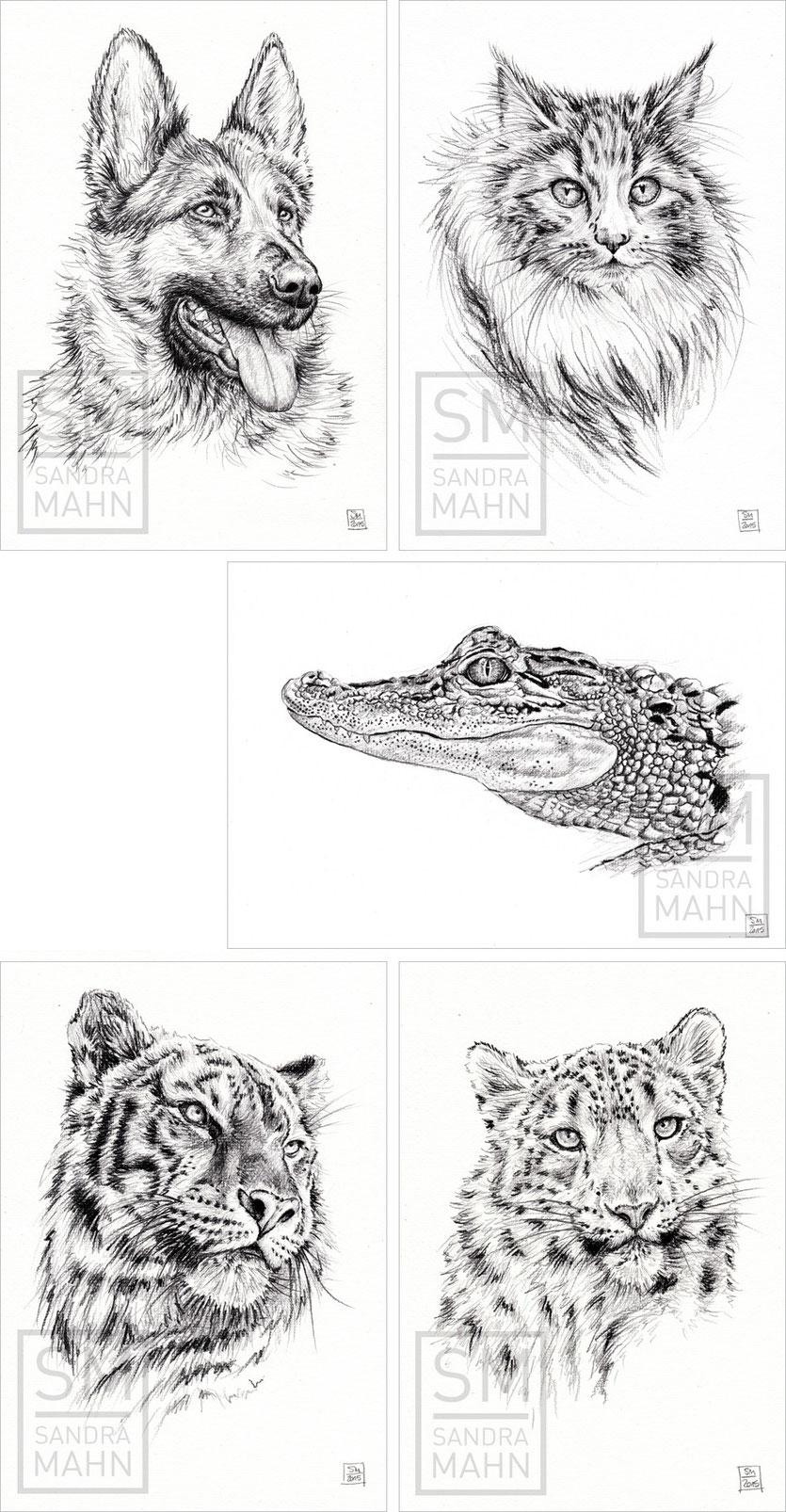 Schäferhund - Katze - Krokodil (verkauft) - Tiger - Schneeleopard | shepherd dog - cat - crocodile (sold) - tiger - snow leopard