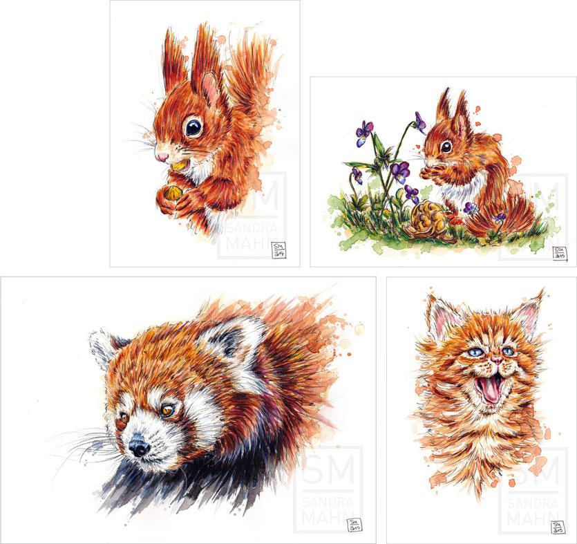 Eichhörnchen - Eichhörnchen - Kleiner Panda - Katze (alle Bilder verkauft) | squirrel - squirrel - red panda - cat (all paintings sold)
