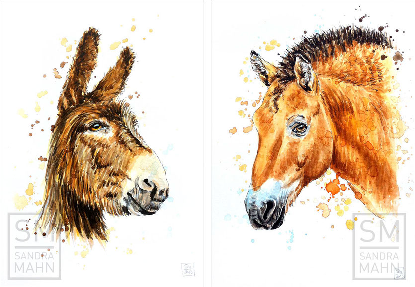 Przewalski-Pferd - Esel (verkauft) | przewalski's horse - donkey (sold)
