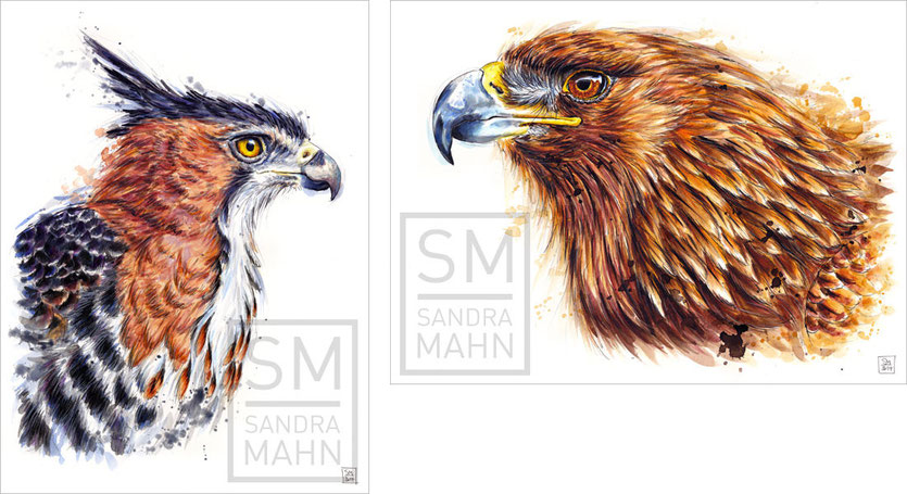 Prachthaubenadler - Steinadler | ornate hawk-eagle - golden eagle