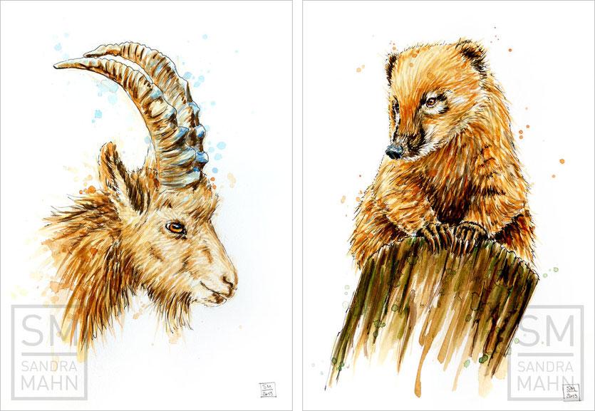 Steinbock - Nasenbär (verkauft) | ibex - coati (sold)