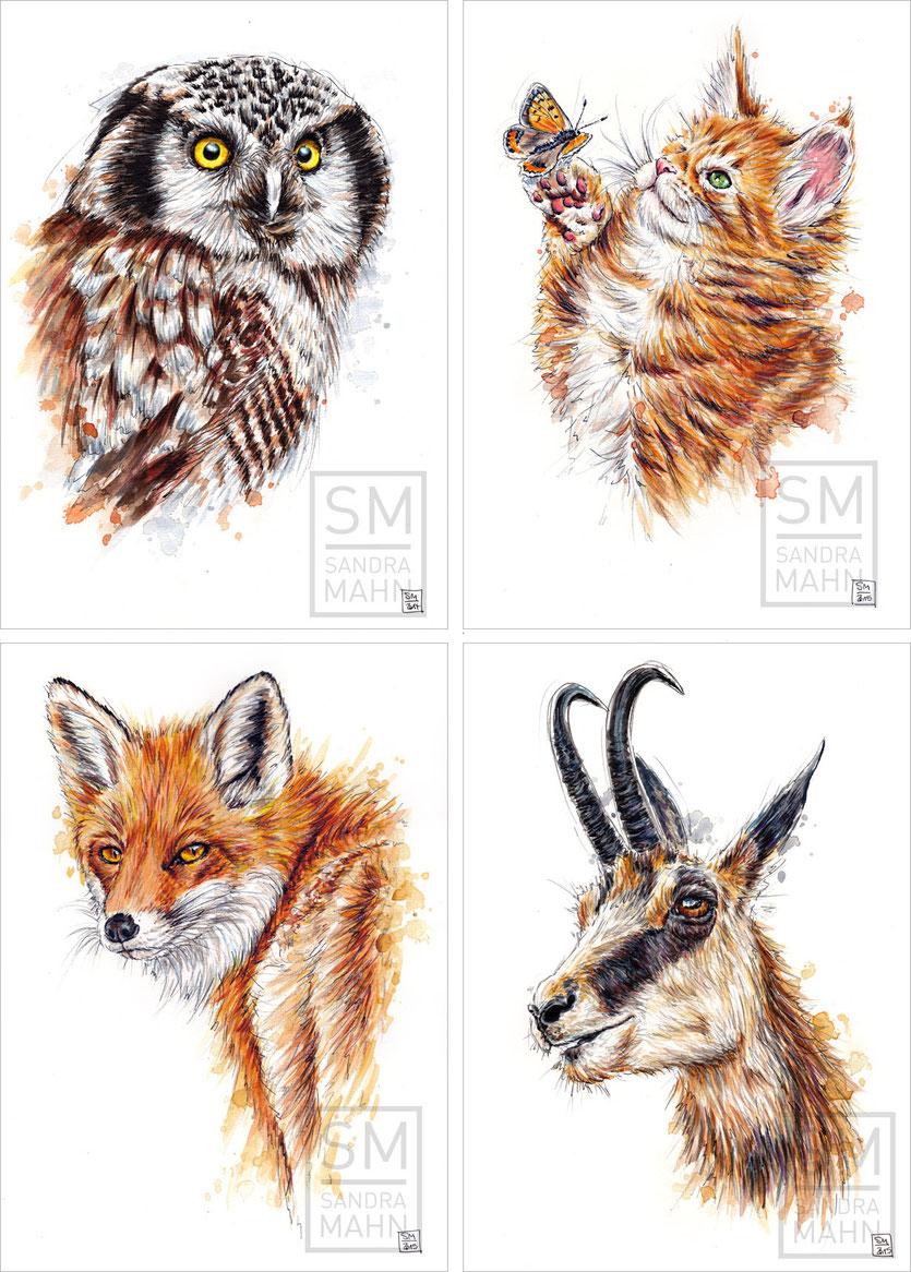 Sperbereule - Katze - Fuchs (verkauft) - Gamsbock | northern hawk-owl - cat - fox (sold) - chamois