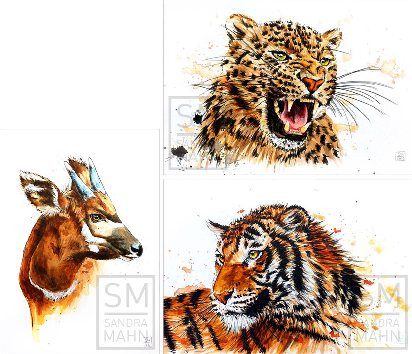 Bongo Antilope (verkauft) - Leopard  (verkauft) - Tiger  (verkauft) | bongo antelope (sold) - leopard (sold) - tiger (sold)