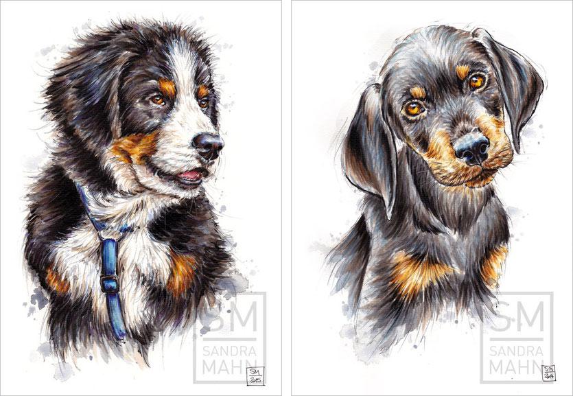 Berner Sennenhund - Schwarzwildbracke | bernese mountain dog - slovakian hound