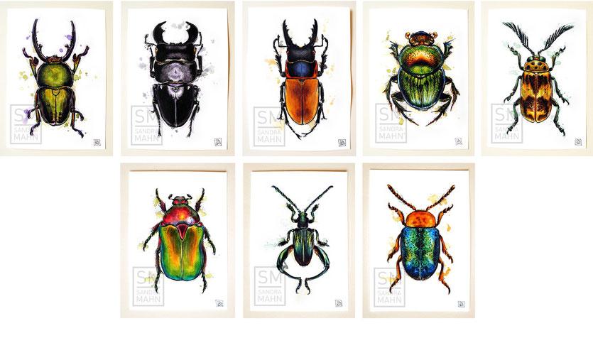 Käfer sammeln | collect beetles