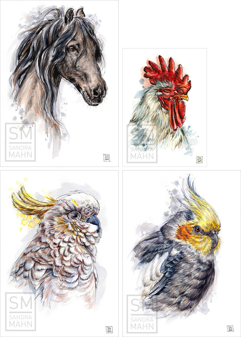 Pferd - Hahn (verkauft) - Kakadu - Nymphensittich | horse - rooster (sold) - cockatoo - cockatiel