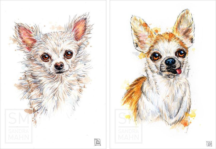 Chihuahua | chihuahua