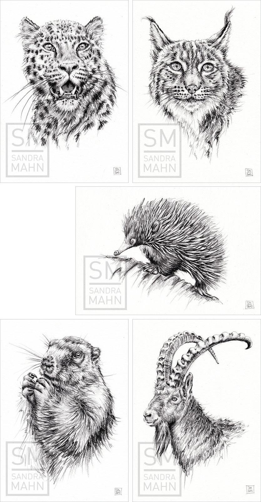 Leopard - Luchs - Ameisenigel - Murmeltier - Steinbock (bis auf Luchs alle verkauft) | leopard - lynx - echidna - marmot - ibex (all sold except lynx)
