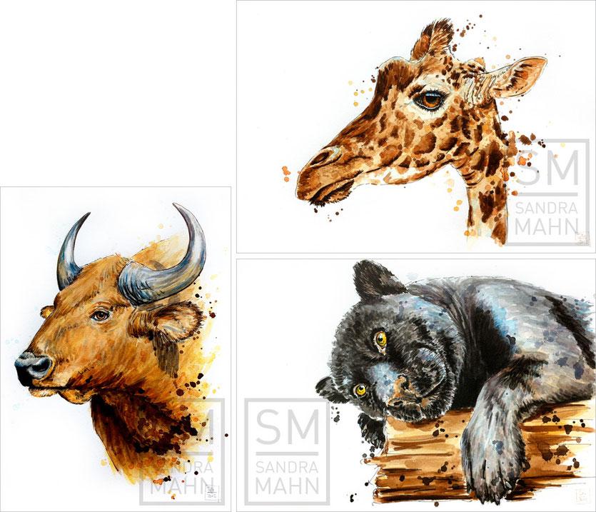 Büffel (verkauft) - Giraffe (verkauft) - Panther (verkauft) | buffalo (sold) - giraffe (sold) - black panther (sold)