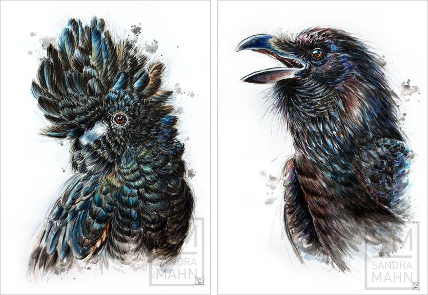 Rabenkakadu - Rabe | black cockatoo - raven