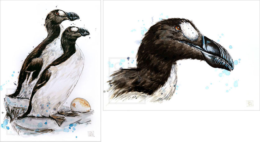 Riesenalk | great auk