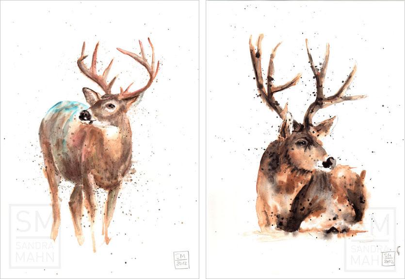 Weißwedelhirsch (verkauft) - Rothirsch | white-tailed deer (sold) - red deer