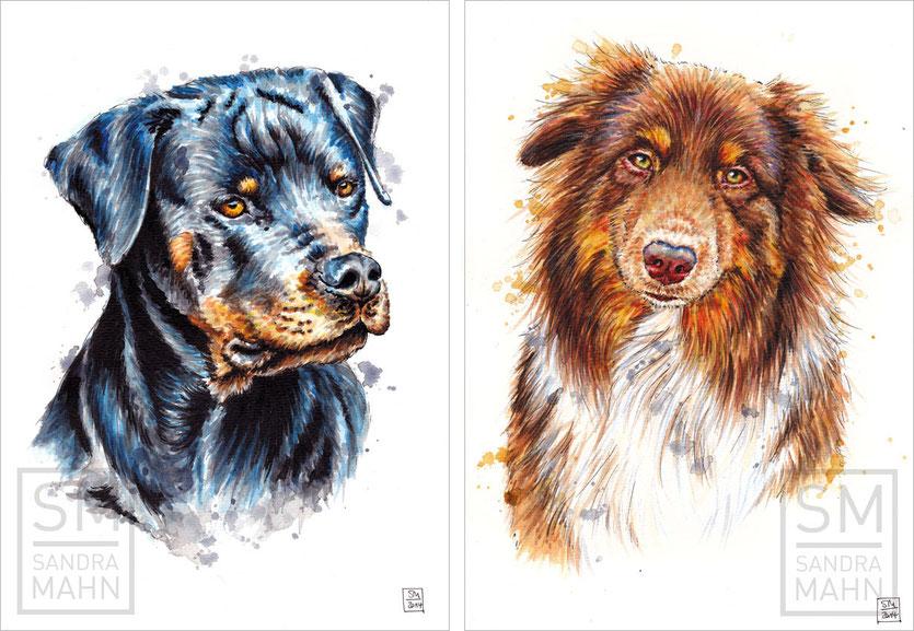 2 Hunde | 2 dogs