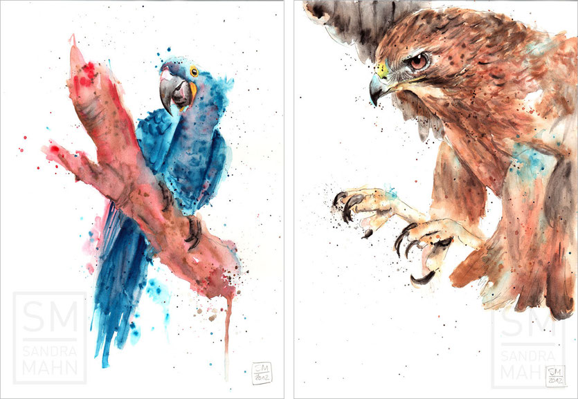 Hyazinth-Ara (verkauft) - Falke (verkauft) | hyacinth macaw (sold) - falcon (sold)