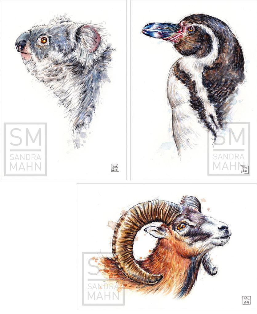 Koala (verkauft) - Pinguin - Mufflon | koala (sold) - penguin - mouflon