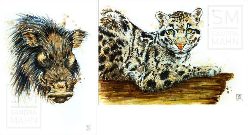 Riesenwaldschwein - Nebelparder | giant forest hog - clouded leopard