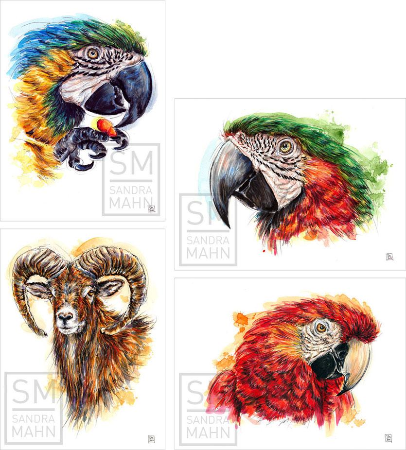 Ara (verkauft) - Ara - Mufflon - Ara (verkauft) | macaw (sold) - macaw - mouflon - macaw  (sold)