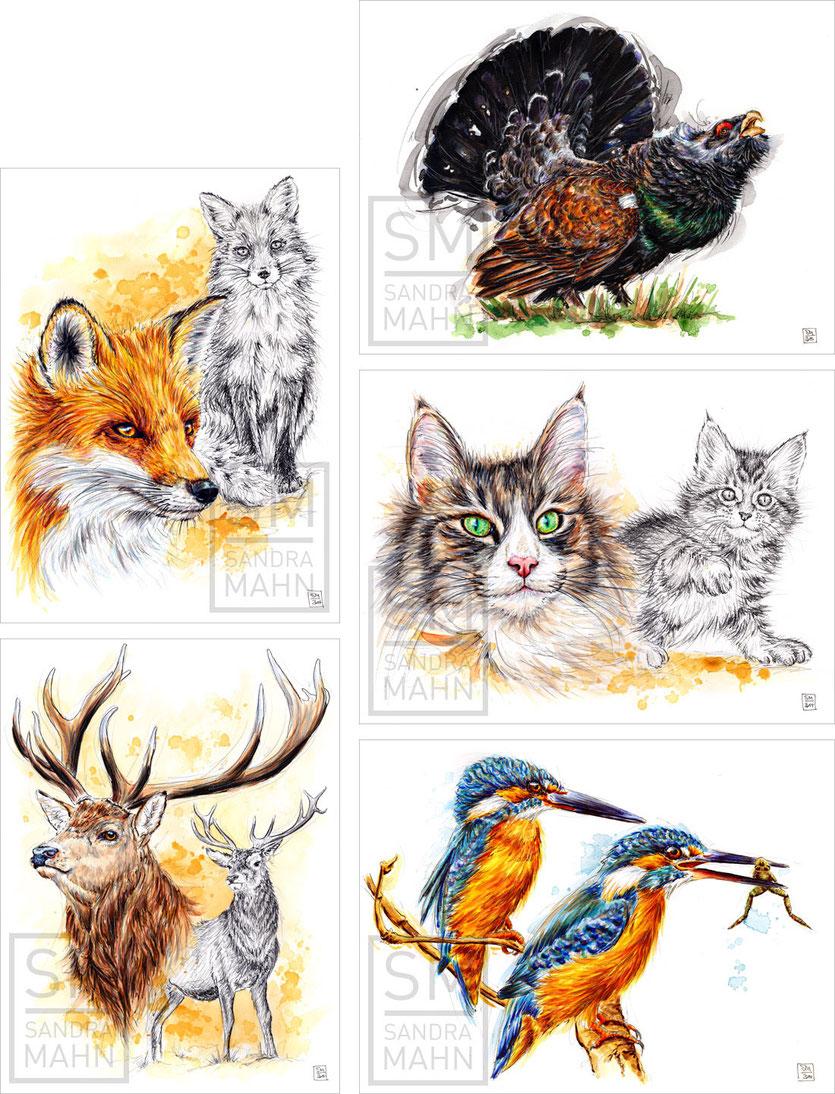 Fuchs (verkauft) - Auerhahn - Katze - Hirsch (verkauft) - Eisvögel (verkauft) | fox (sold) - capercaillie - cat - stag (sold) - kingfishers (sold)