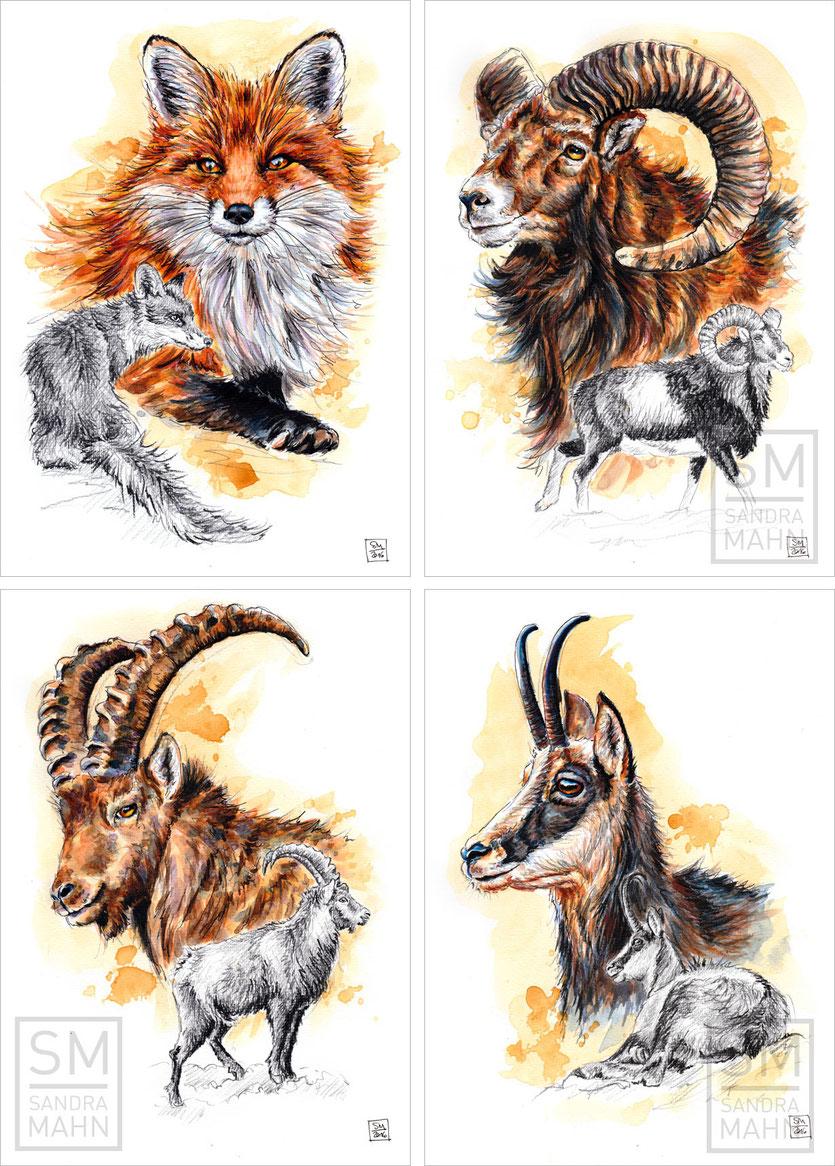 Fuchs - Mufflon (verkauft) - Steinbock (verkauft) - Gams (verkauft) | fox - mouflon (sold) - ibex (sold) - chamois (sold)
