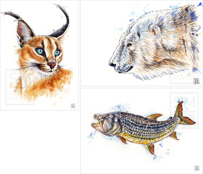 Karakal - Eisbär - Tigerfisch | caracal - polar bear - tigerfish