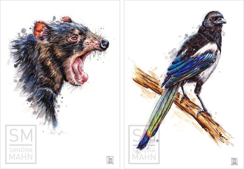 Tasmanischer Teufel - Elster | tasmanian devil - magpie