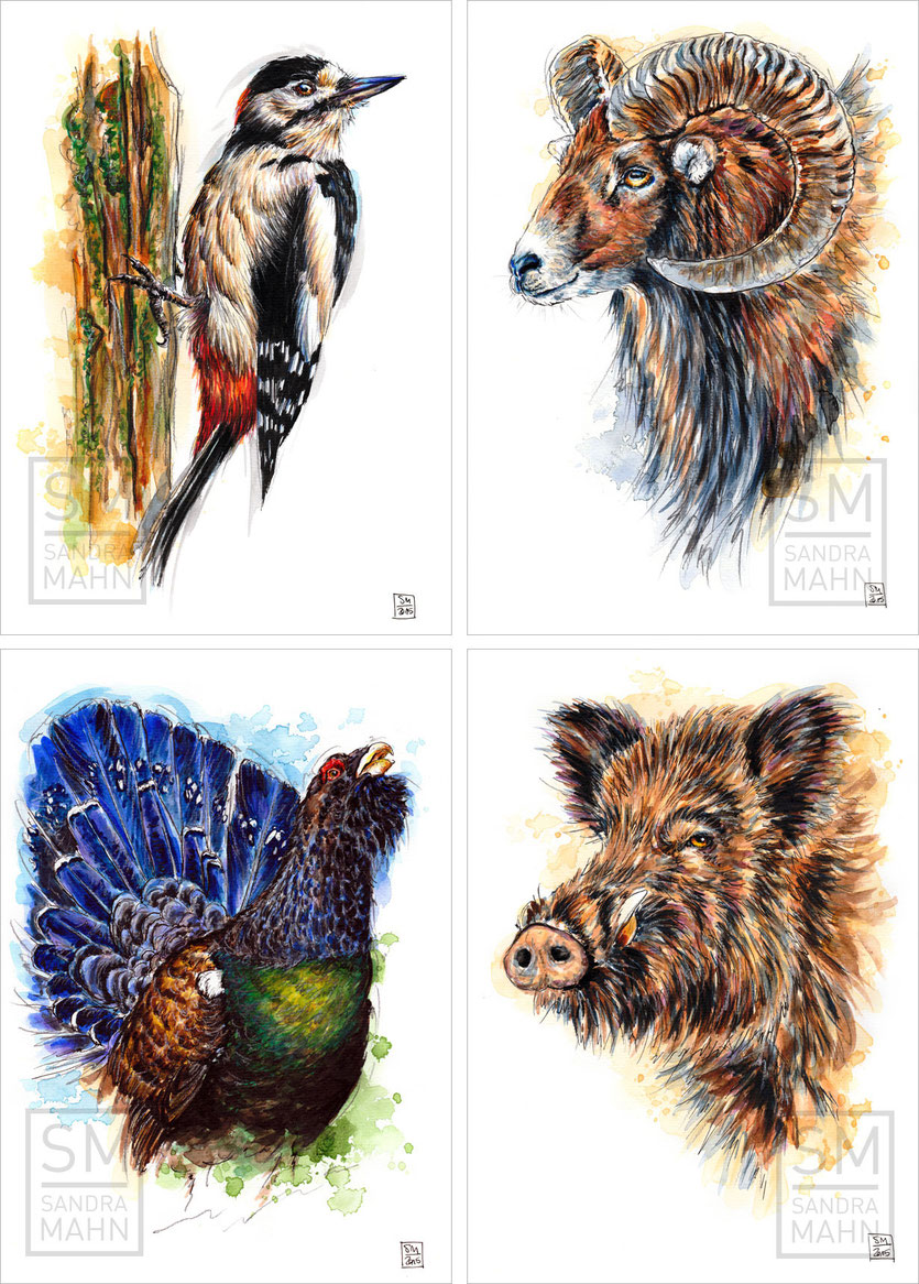 Specht - Mufflon - Auerhahn - Wildschwein | woodpecker - mouflon - capercaillie - wild boar