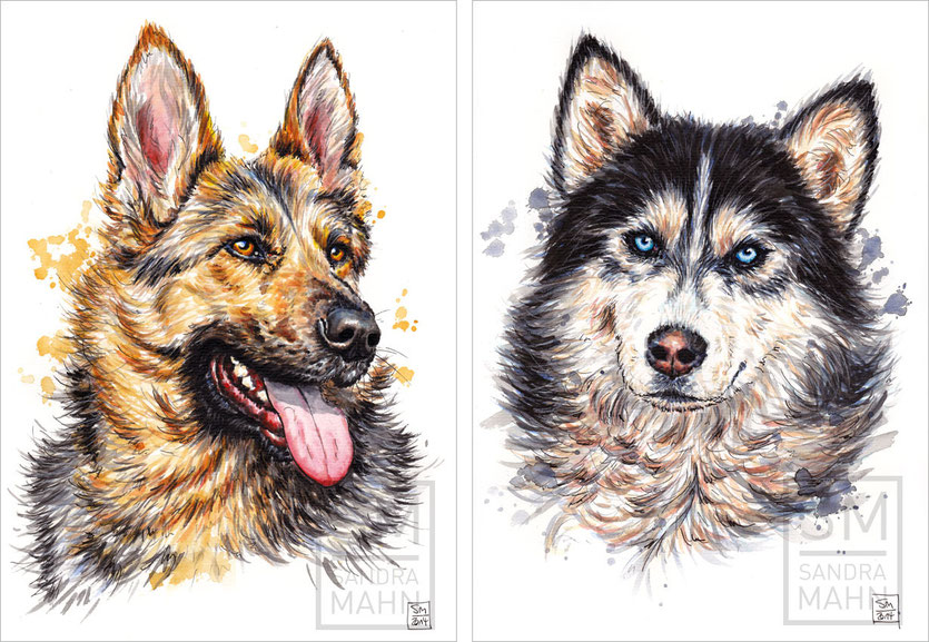 Schäferhund (verkauft) - Husky | shepherd dog (sold) - husky