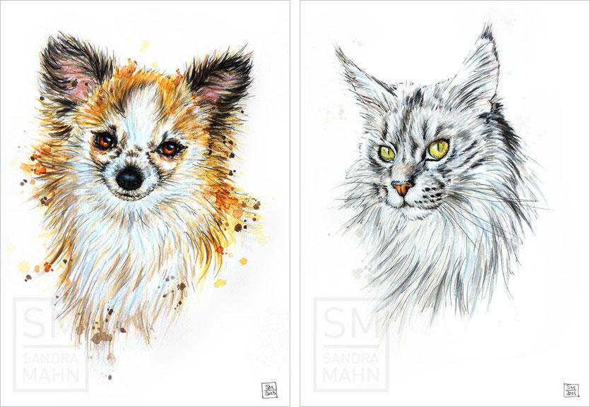 Chihuahua - Katze | chihuahua - cat