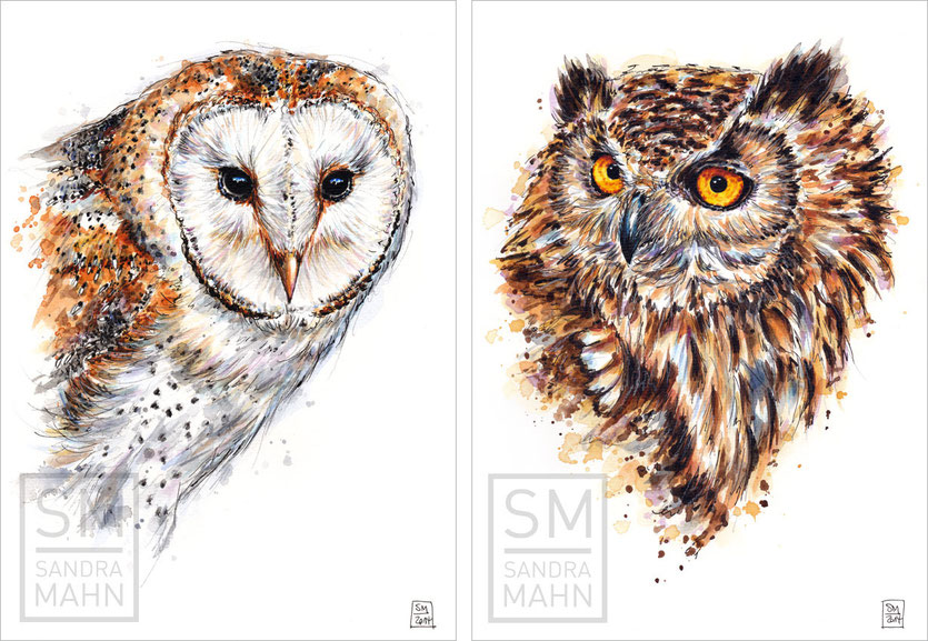 Schleiereule - Bengalenuhu (verkauft) |  barn owl - indian eagle-owl (sold)