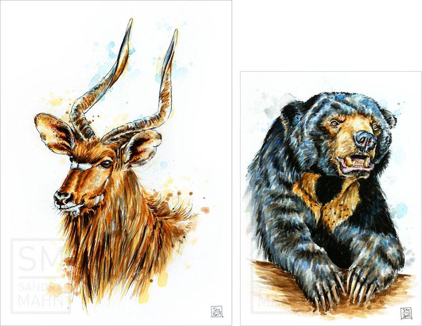 Nyala Antilope - Malaienbär | Nyala Antelope - sun bear