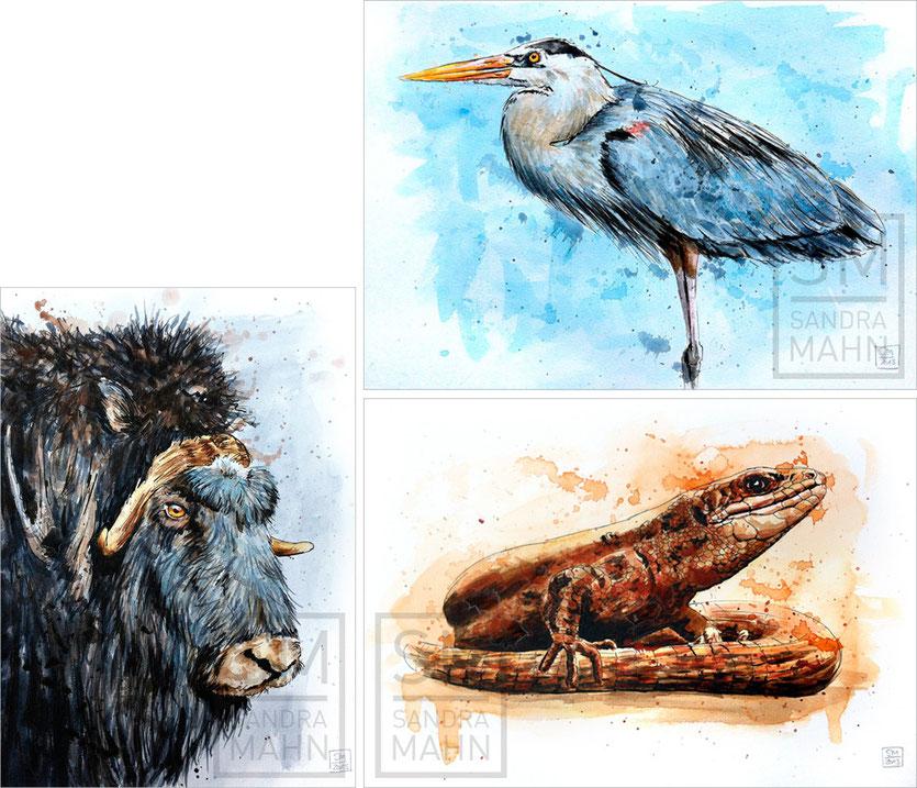 Moschusochse (verkauft) - Kanadareiher (verkauft) - Eidechse (verkauft) | muskox (sold) - great blue heron (sold) - lizard (sold)
