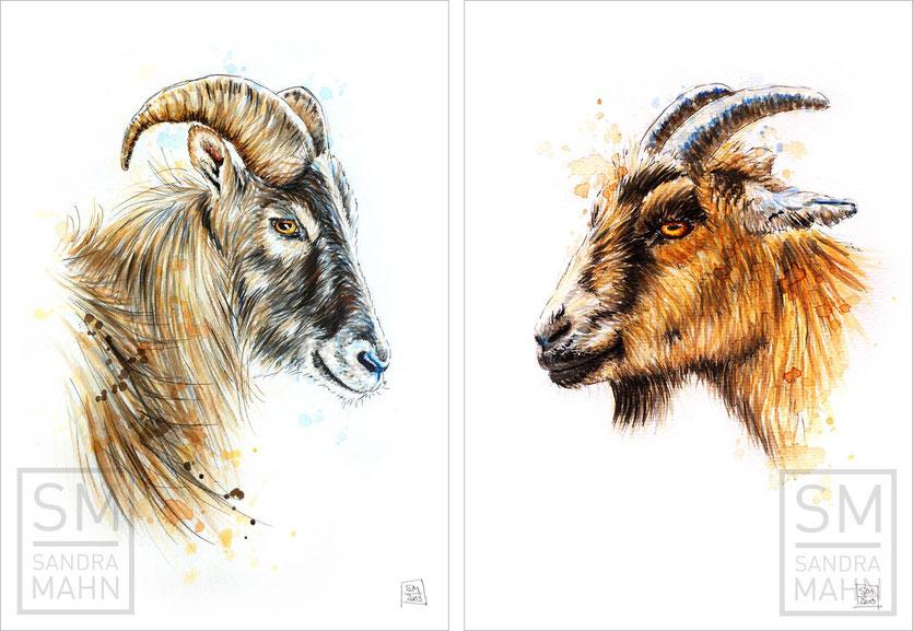 Tahr - Ziege | tahr - goat