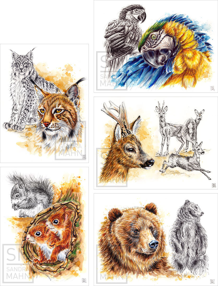 Luchs - Papagei - Rehbock - Bär (alle Bilder verkauft) - Eichhörnchen | lynx - macaw - deer - bear (all paintings sold) - red squirrel