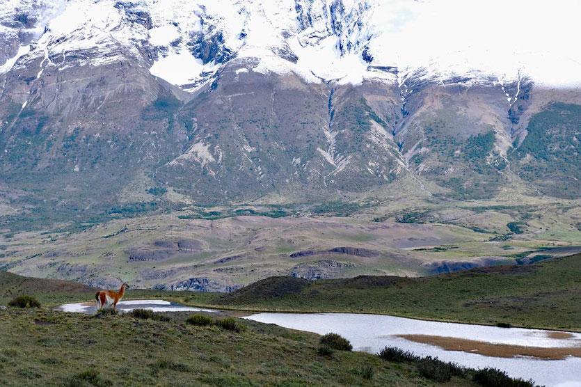 Seelandschaft und Guanaco Torres del Paine