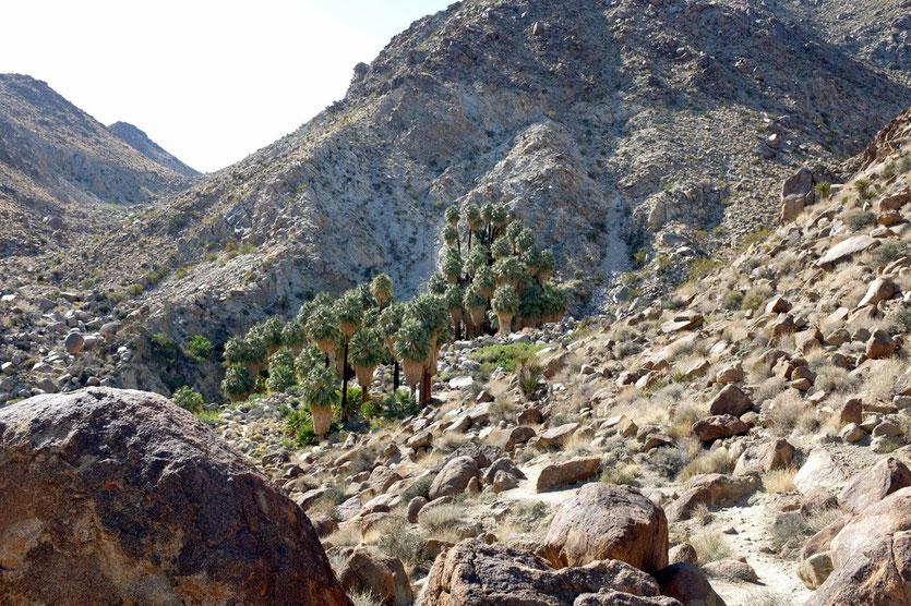 Wanderung 49 Palms Oasis trail Joshua Tree National Park