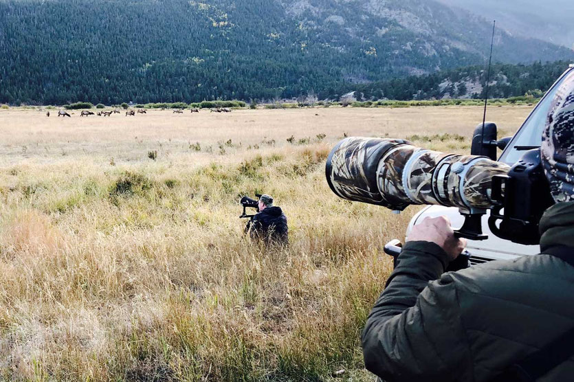 Fotografen Elk Viewing Time im Moraine Park Rocky Mountain NP